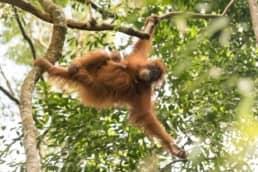 Sumatra, Indonesia | 2018